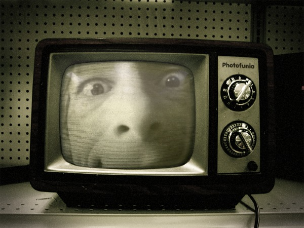 MadGrin in TV