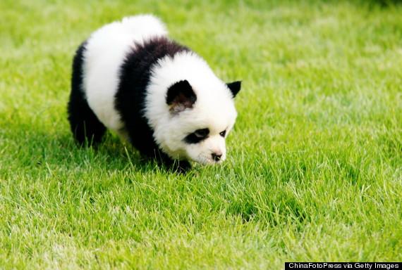 Panda cane