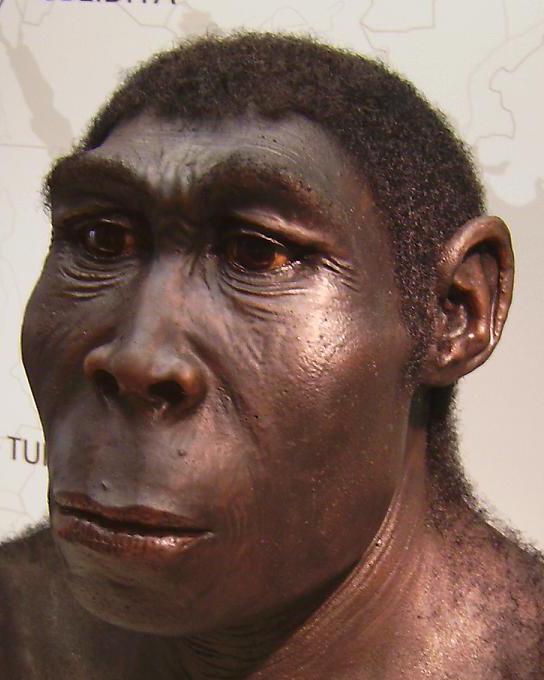 L'homo erectus non ha le emorroidi